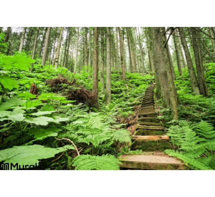Stairway through forest Wall Mural Wall art Wall decor