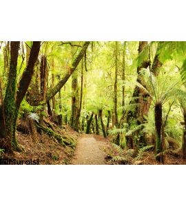 Rainforest Panorama Wall Mural Wall Tapestry tapestries