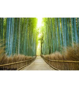 Kyoto, Japan Bamboo Forest Wall Mural