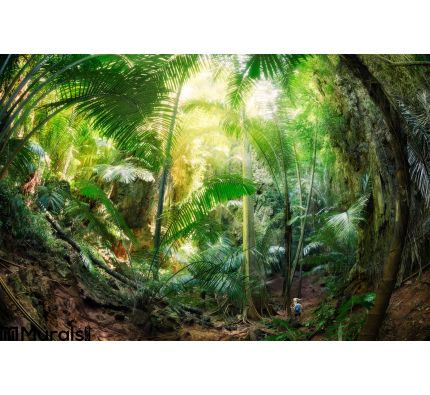 Jungle Krabi Thailand Wall Mural Wall Tapestry tapestries