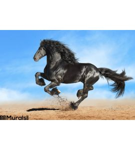 Black Friesian Horse Runs Gallop Wall Mural