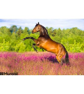 Bay Horse Rearing Pink Flowers Wall Mural Wall art Wall decor