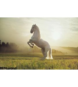 Majestic photo of royal white horse Wall Mural