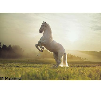 Majestic photo of royal white horse Wall Mural Wall art Wall decor