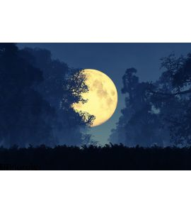 Mysterious Magical Fantasy Fairy Tale Forest Night Full Moon Wall Mural Wall art Wall decor
