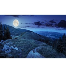 Pine Trees Near Valley Mountain Night Wall Mural Wall Tapestry tapestries