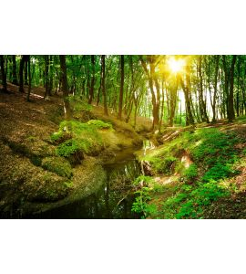 Forest River Wall Mural Wall Tapestry tapestries