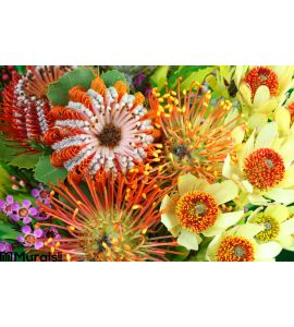Bright Australian Native Flowers Wall Mural