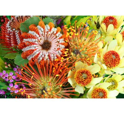 Bright Australian Native Flowers Wall Mural Wall Tapestry tapestries