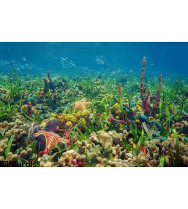 Thriving Underwater Marine Life Tropical Seabed Wall Mural Wall Tapestry tapestries