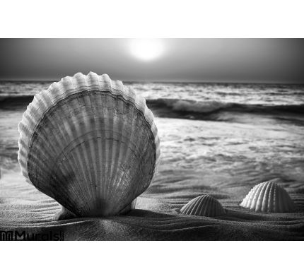 Sea Shells Sand Wall Mural Wall Tapestry tapestries