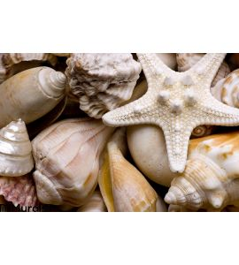 Seashell Background Wall Mural