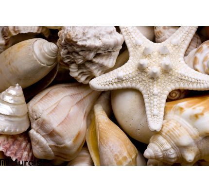 Seashell Background Wall Mural Wall Tapestry tapestries