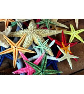 Starfish Wall Mural Wall Tapestry tapestries