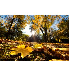 Fall Autumn Park Falling Leaves Wall Mural Wall Tapestry tapestries