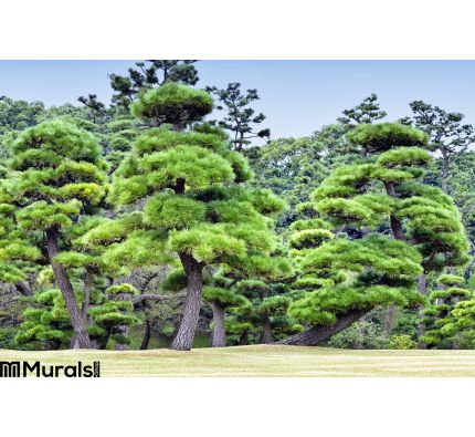 Green pine trees in a forest Wall Mural Wall Tapestry tapestries