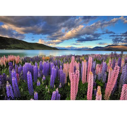 Lupines Shore Lake Tekapo Wall Mural Wall Tapestry tapestries