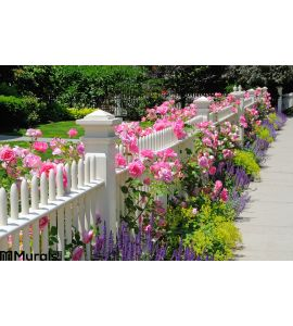 Garden fence with pink roses Wall Mural