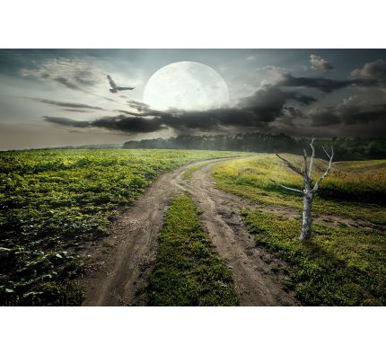 Dry tree and moon Wall Mural Wall Tapestry tapestries
