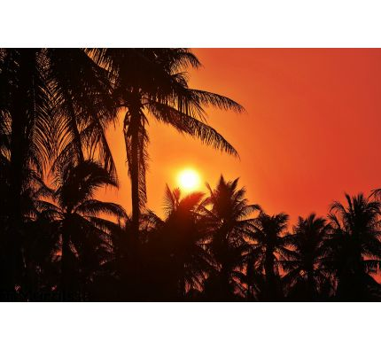 Sunset with coconut tree. Silhouettes Wall Mural Wall Tapestry tapestries