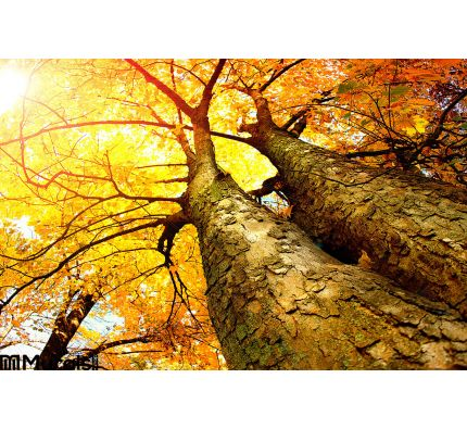 Autumn Trees Wall Mural Wall Tapestry tapestries