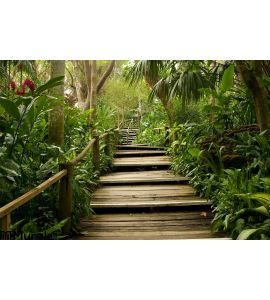 Pathways Jungle Wall Mural Wall Tapestry tapestries