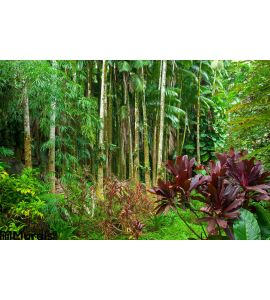 Lush Tropical Rain Forest Wall Mural Wall Tapestry tapestries