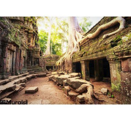 Angkor Wat Cambodia Ta Prohm Khmer Ancient Buddhist Temple Wall Mural Wall art Wall decor