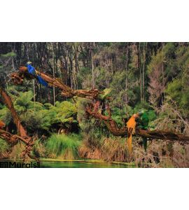 Tropical Birds Jungle Wall Mural