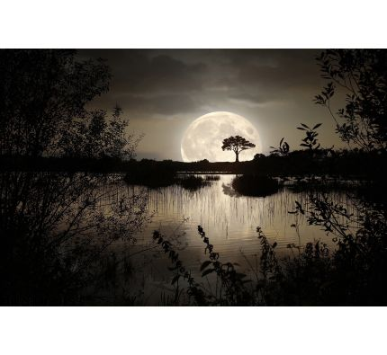 Big Moon Wall Mural Wall art Wall decor