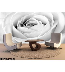 White Rose Close Up Wall Mural Wall art Wall decor