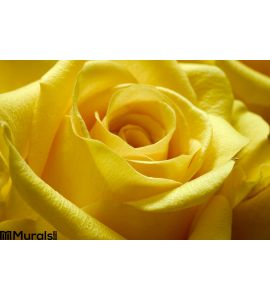 Yellow Rose 2 Wall Mural
