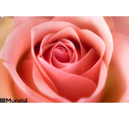 Macro Image Rose Wall Mural Wall art Wall decor