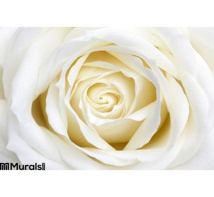 White Rose Wall Mural Wall art Wall decor