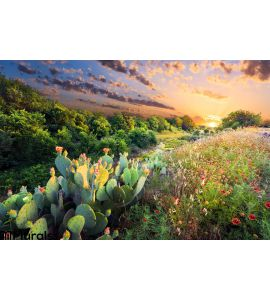 Cactus Wildflowers Sunset Wall Mural