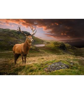 Red Deer Stag Dramatic Mountain Landscape Wall Mural