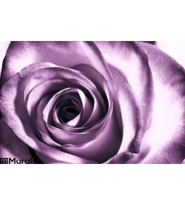 Purple Rose Wall Mural