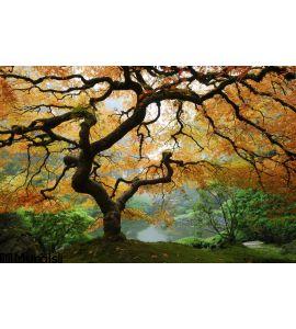 Autumn Maple Wall Mural