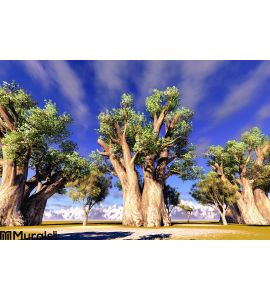 African Baobabs Wall Mural Wall Tapestry tapestries