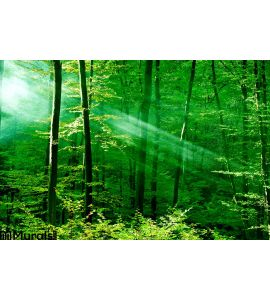 Lights Forest Wall Mural Wall Tapestry tapestries