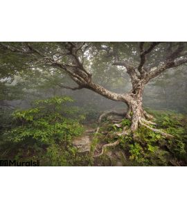 Creepy Fairytale Tree Spooky Forest Fog Nc Fantasy Wall Mural Wall Tapestry tapestries