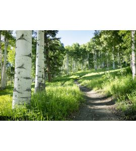 Beautiful Mountain Hiking Trail Aspen Trees Vail Colorado Wall Mural