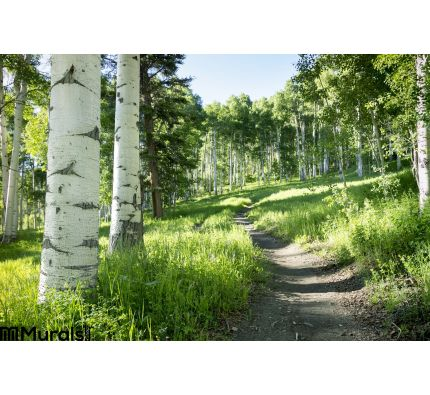 Beautiful Mountain Hiking Trail Aspen Trees Vail Colorado Wall Mural Wall Tapestry tapestries