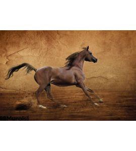 Runing Arabian Horse Wall Mural
