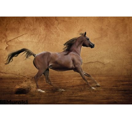 Runing Arabian Horse Wall Mural Wall art Wall decor