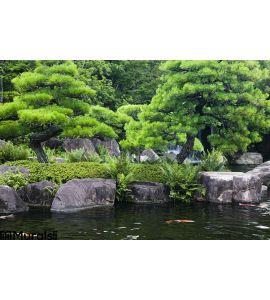Japan Himeji Himeji Koko En Gardens Pond Koi Carps Wall Mural Wall Tapestry tapestries