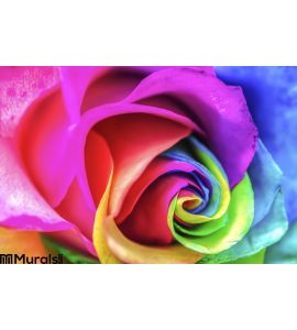 Rainbow Flower Close Up Wall Mural