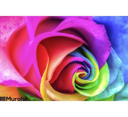 Rainbow Flower Close Up Wall Mural Wall art Wall decor