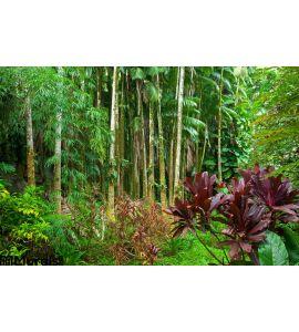 Lush Tropical Rain Forest Wall Mural Wall art Wall decor