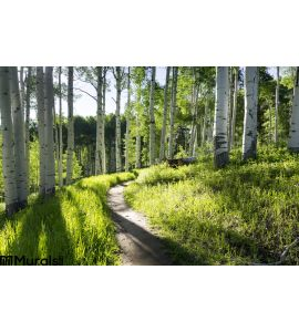 Beautiful Mountain Hiking Trail Aspen Trees Vail Colorado Wall Mural Wall art Wall decor